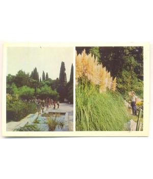 Крым. Никитский ботанический сад. Водный каскад. Пампасская трава
