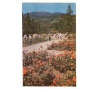 Никитский ботанический сад. Розарий в верхнем парке