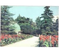 Крым. Никитский ботанический сад. Уголок сада