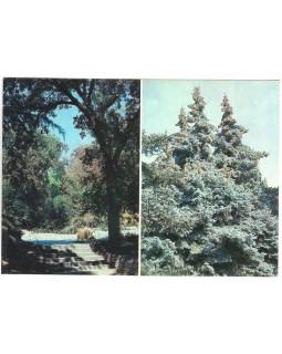 Уголок парка Монтедор. Хвойные экзоты в Верхнем парке