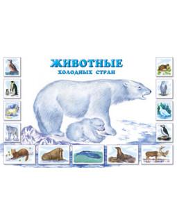 Плакат: Животные холодных стран. Что мы знаем об этих животных?