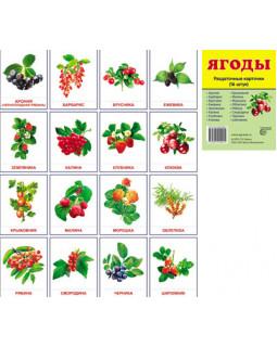 Ягоды. 16 раздаточных карточек с текстом