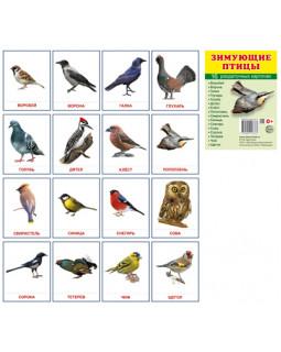 Зимующие птицы. 16 раздаточных карточек с текстом