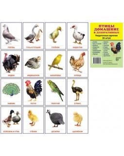 Птицы домашние и декоративные. 16 демонстрационных карточек с текстом