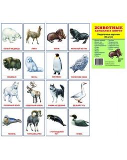 Животные холодных широт. 16 демонстрационных карточек с текстом