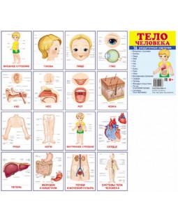Тело человека. 16 раздаточных карточек с текстом