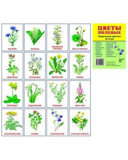Цветы полевые. 16 демонстрационных карточек с текстом