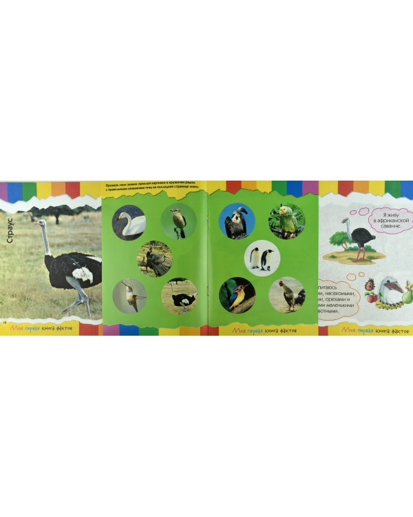 Моя первая книга фактов. Птицы