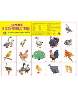 """Демонстрационный плакат А2 """"Домашние и декоративные птицы"""""""