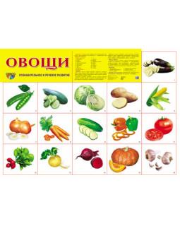 """Демонстрационный плакат А2 """"Овощи"""""""
