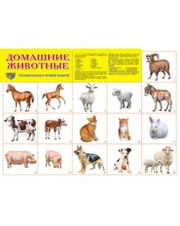 """Демонстрационный плакат А2 """"Домашние животные"""""""
