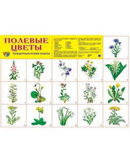 """Демонстрационный плакат А2 """"Полевые цветы"""""""