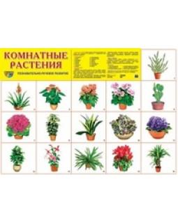 """Демонстрационный плакат А2 """"Комнатные растения"""""""