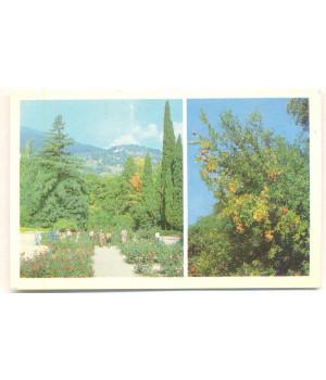 Крым. Никитский ботанический сад. Розарий. Гранатовое дерево