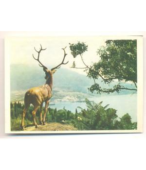 Крим. Ялта. Скульптура оленя в приморському парку
