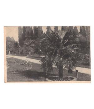 Крым. Никитский сад. Пальмовая роща