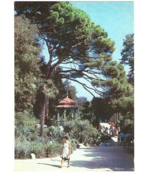 Крым. Никитский ботанический сад. Беседка под пинией в Нижнем парке