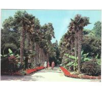 Никитский ботанический сад. Пальмовая аллея в Нижнем парке